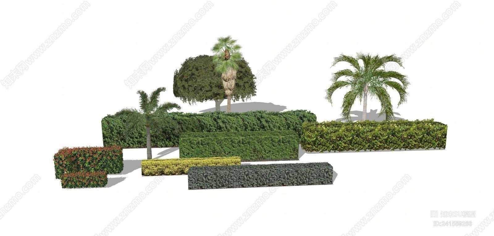 红叶绿篱植物