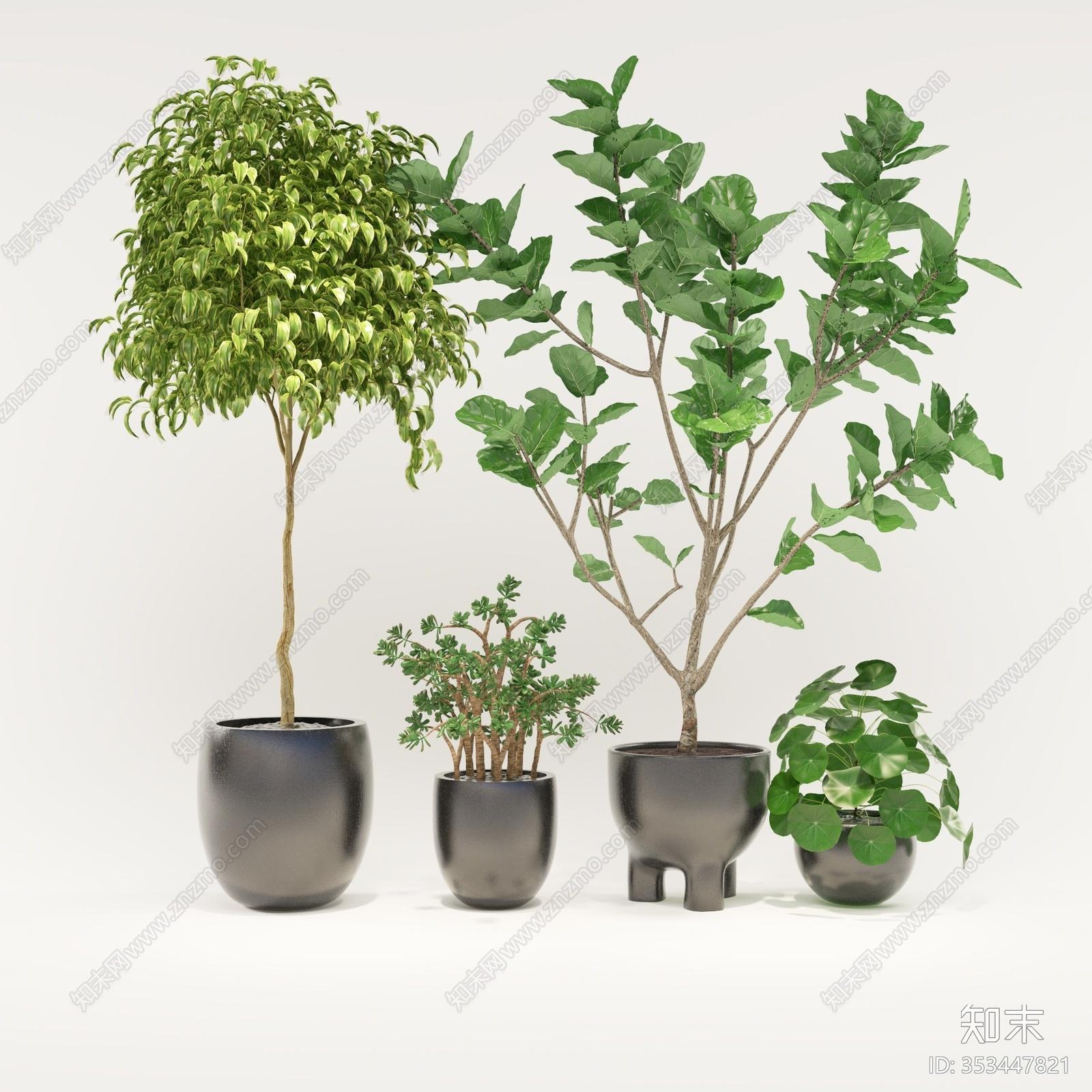 现代简约盆栽 植物