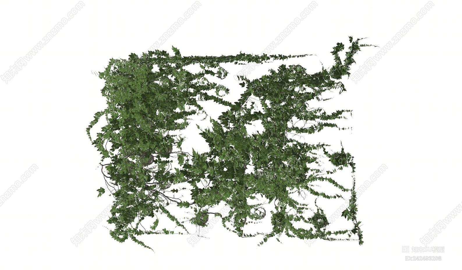 现代植物墙