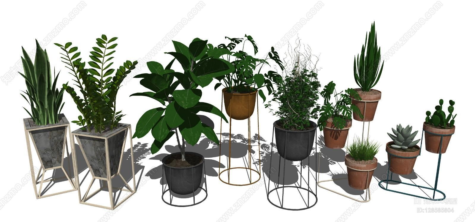 现代室内植物盆栽