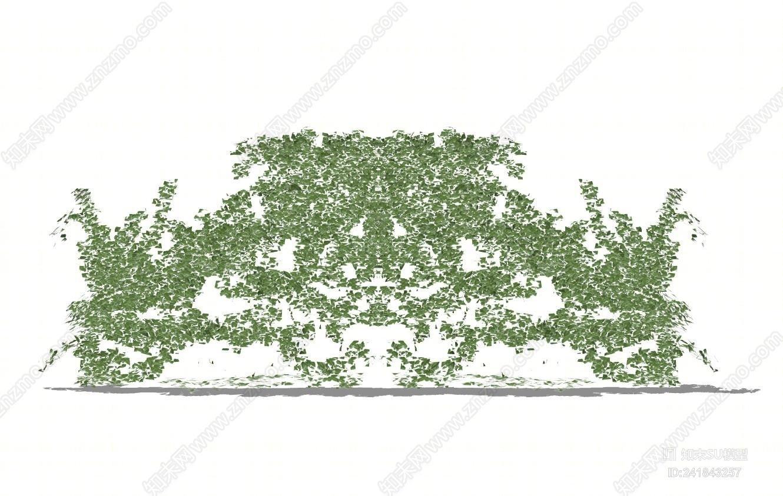 绿植墙 绿植盆栽 藤本植物