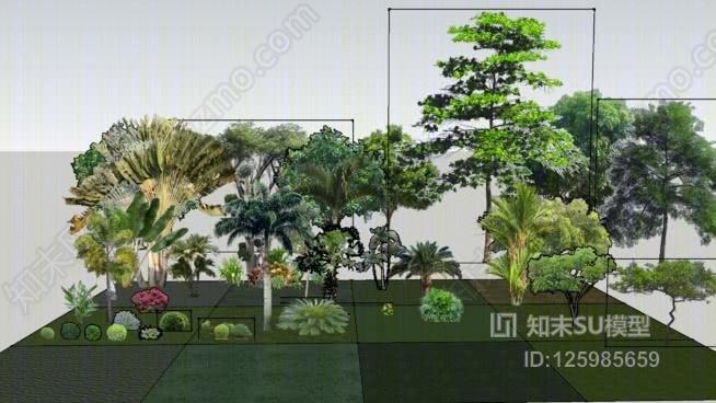 热带植物SU模型下载【ID:125985659】