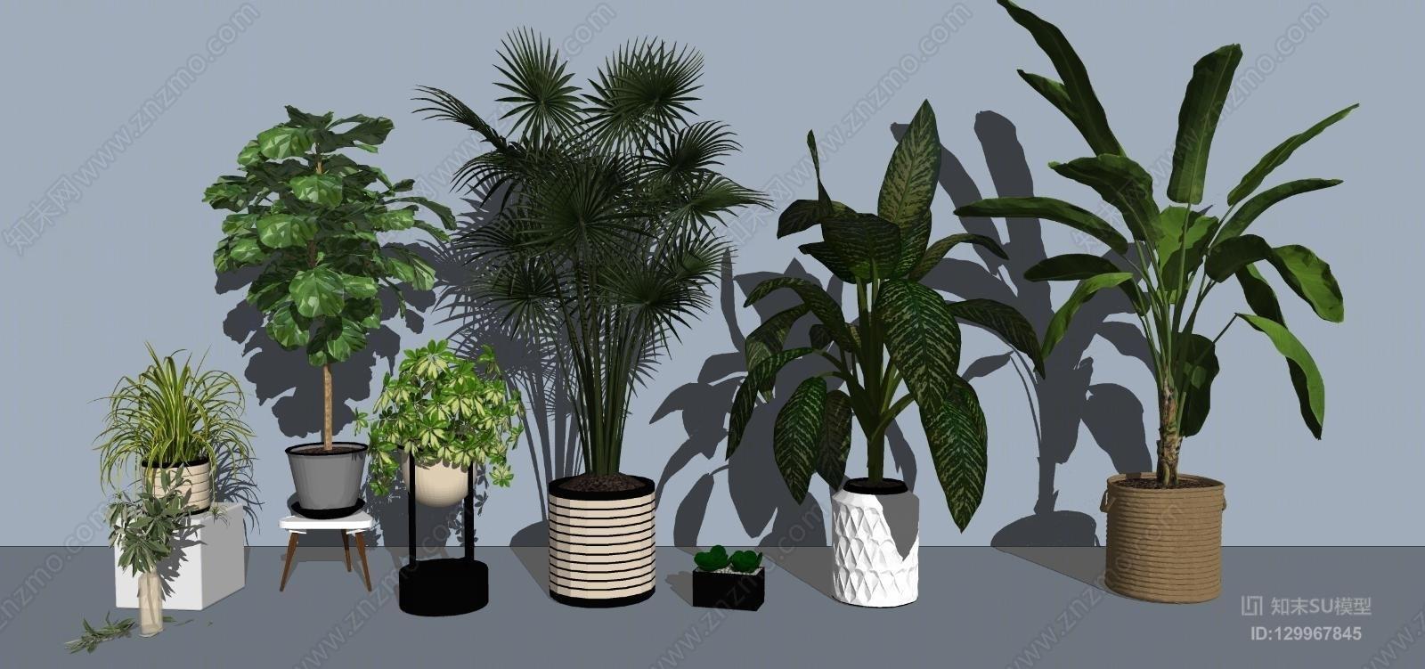 现代绿植盆栽植物