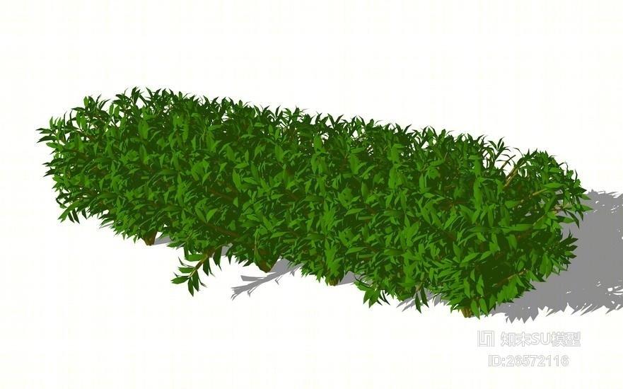灌木SU模型