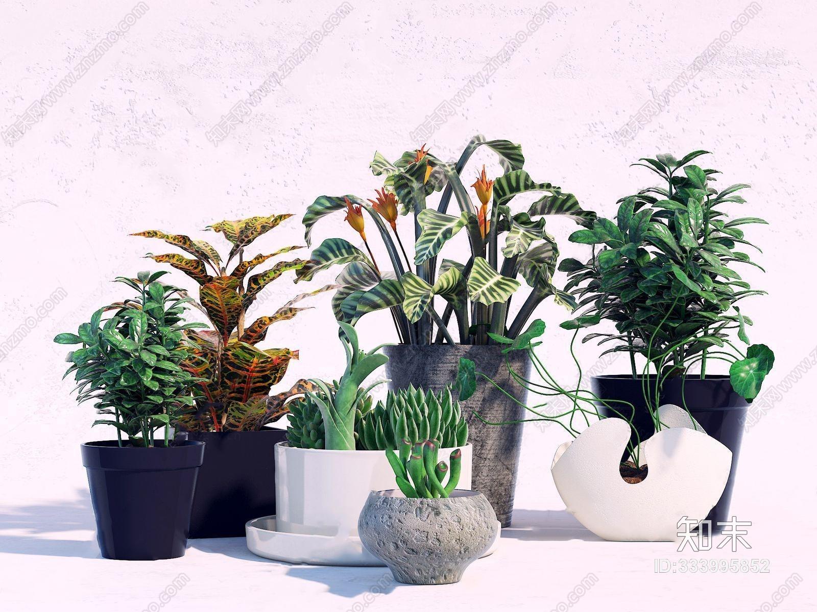 现代盆景花卉多肉植物  现代盆栽盆景 植物 花卉 花艺 多肉植物