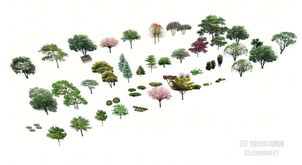 精品免费好用的树灌木植物组合SU模型