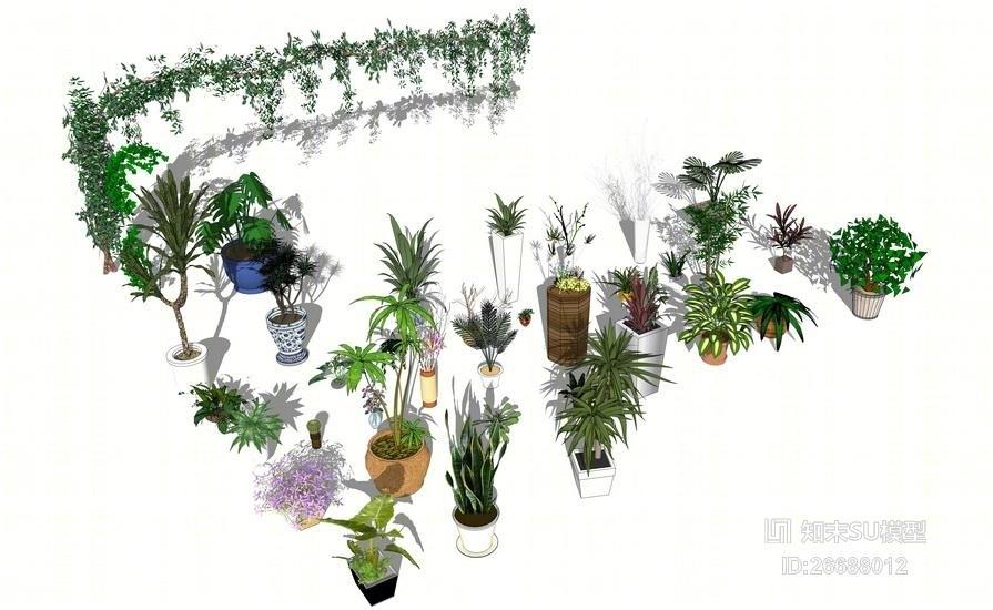 精品免费盆栽花盆爬藤植物组合SU模型